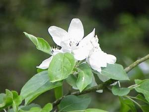 ¿Qué beneficios nos pueden aportar las flores de bach?
