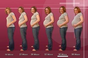 gravidez semana a semana