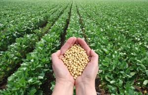 mitos de la soja