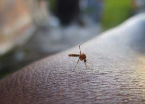 productos antimosquitos